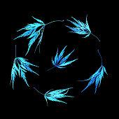 arrangement five blue lace leaf japanese