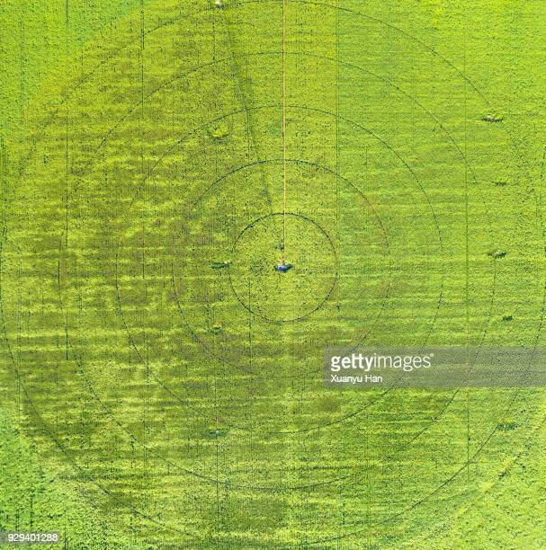 circles on green field - crop circle stock pictures, royalty-free photos & images