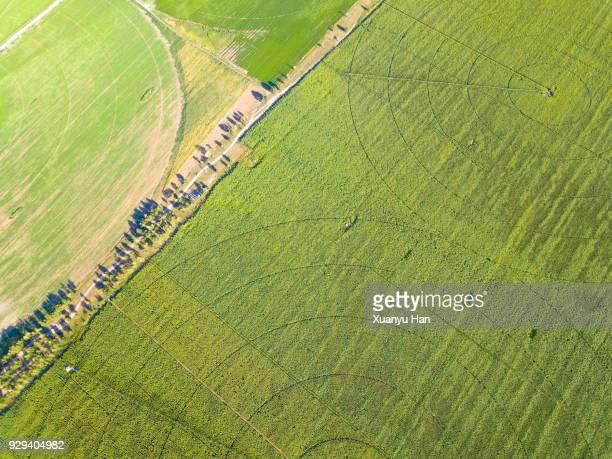 circles on green field - crop circle photos et images de collection