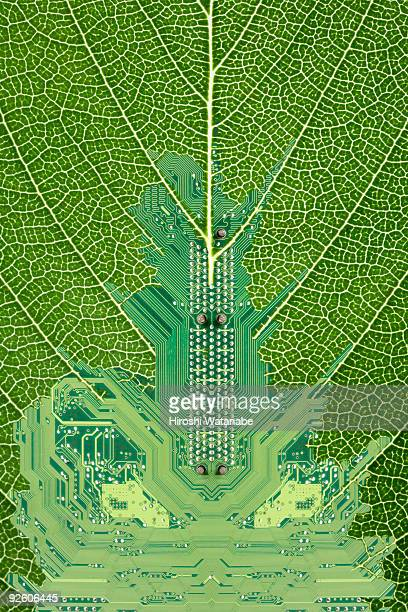 Circuit board which is growing on a leaf