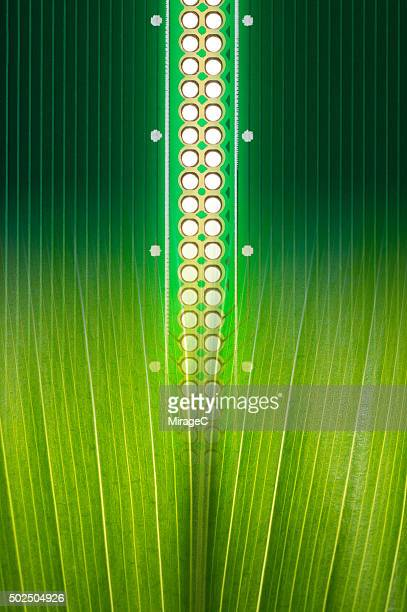 Circuit Board with Green Leaf