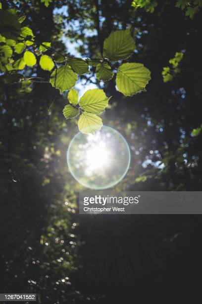 circular lens flare with leaves - southampton england stock pictures, royalty-free photos & images