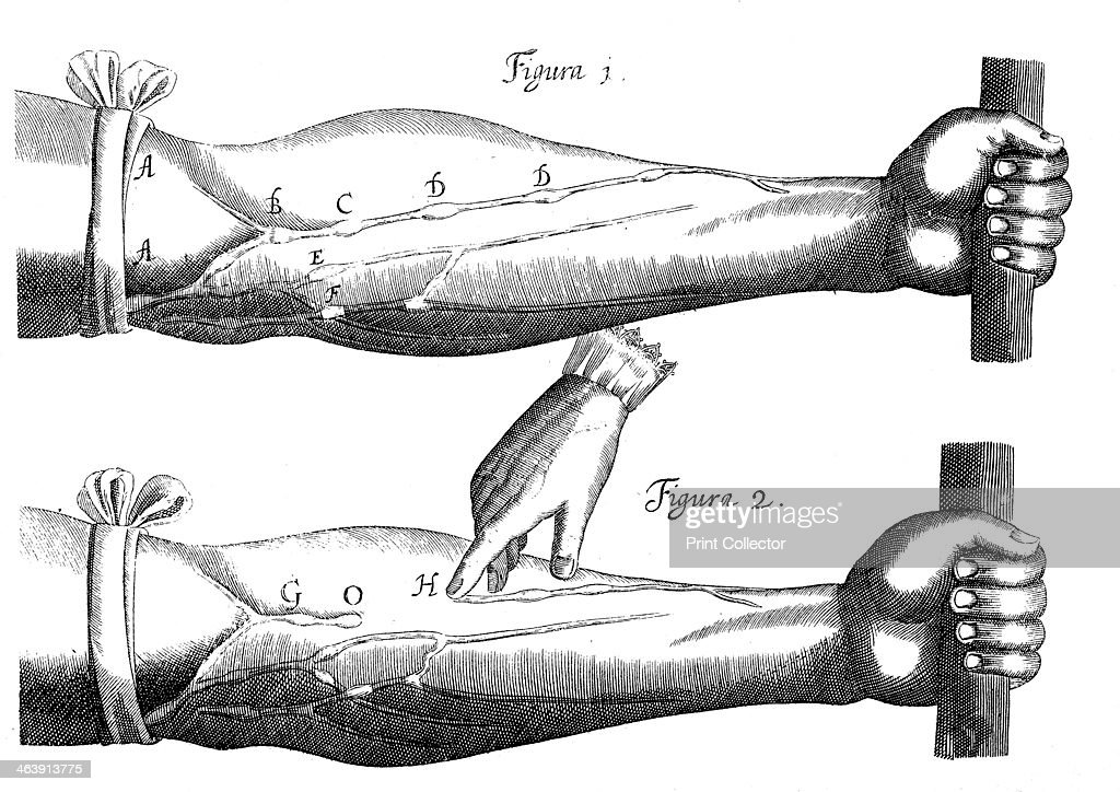 Circulation Of The Blood 1628 Pictures Getty Images