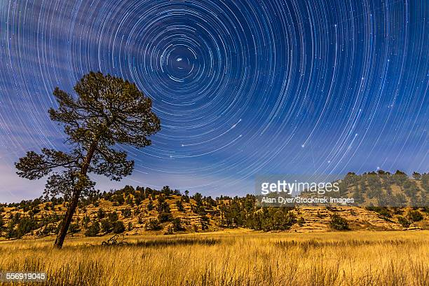 circumpolar star trails over mimbres valley in the gila national forest, new mexico. - grande carro costellazione foto e immagini stock