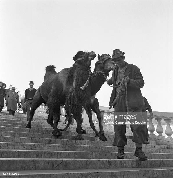 Circus dromedaries with their trainer crossing the Scalzi bridge Venice 1954