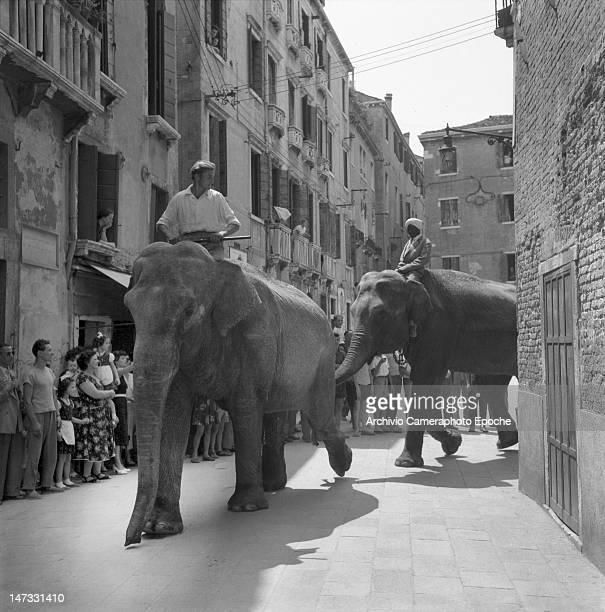 Circus elephants crossing the city with theyr trainers the crows stunned Venice 1954