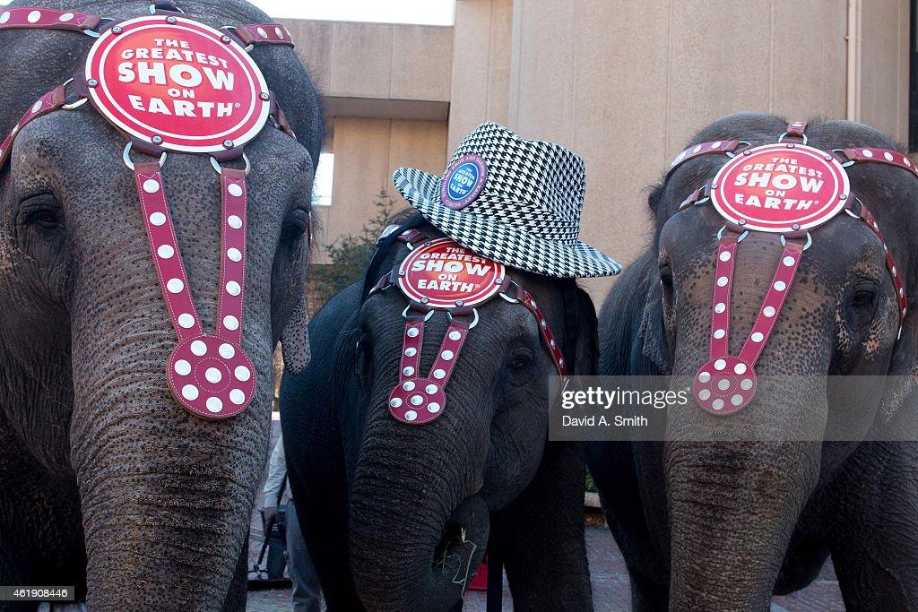 Circus elephants entertain the crowd during Ringling Bros. 'Elephant Brunch' at Birmingham-Jefferson Civic Center on January 21, 2015 in Birmingham, Alabama.