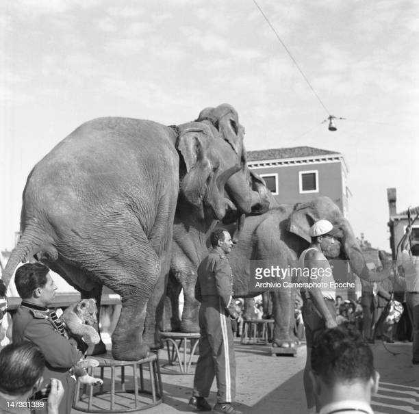Circus elephants performing on the Scalzi bridge Venice 1954