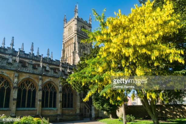 Cirencester; Parish Church, St John Baptist, Cotswolds, Laburnum flowering, UK