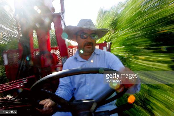 Cirilo Baldaras drives his loader through the groves as he fills it up with oranges for Sorrells Brothers Packing Co Inc July 13 2006 in Arcadia...