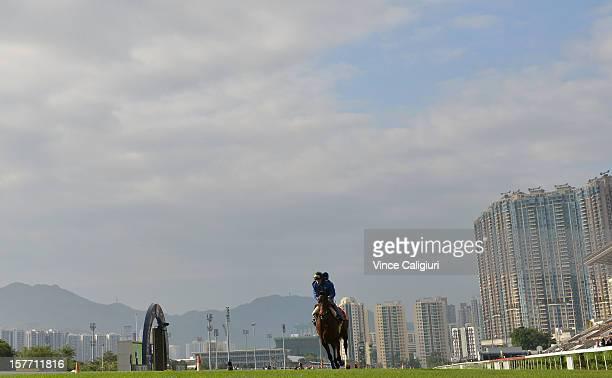 Cirrus Des Aigles of France during trackwork session at Sha Tin racecourse on December 6 2012 in Hong Kong Hong Kong