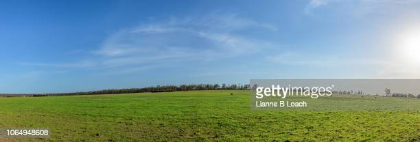 cirrus swirl - lianne loach stock pictures, royalty-free photos & images