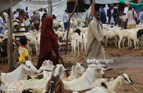 Citizens arrive to buy sacrificial animals at a livestock market before the Eid alAdha in Mogadishu Somalia on July 30 2020