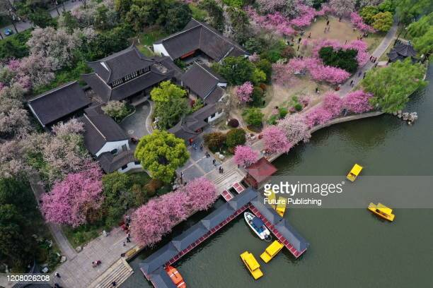 Citizens view begonias in Mochou Lake Park, the largest variety of begonias in China, Nanjing City, Jiangsu Province, China, March 22, 2020.-...