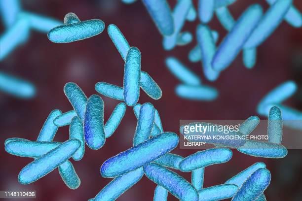 citrobacter bacteria, illustration - gram stain fotografías e imágenes de stock