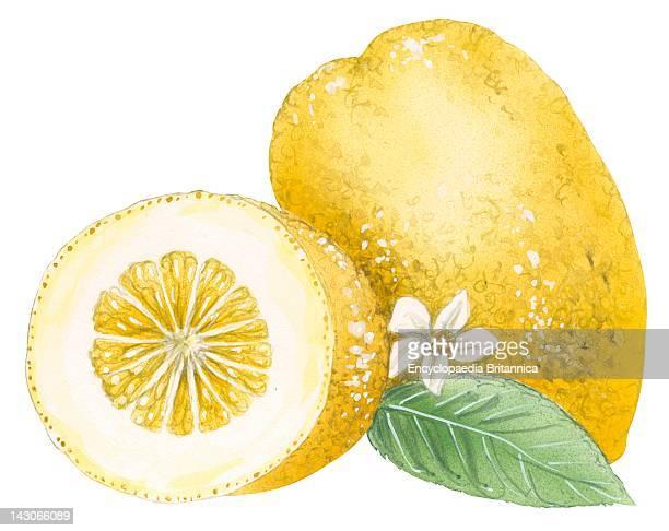 Citron, Citron .