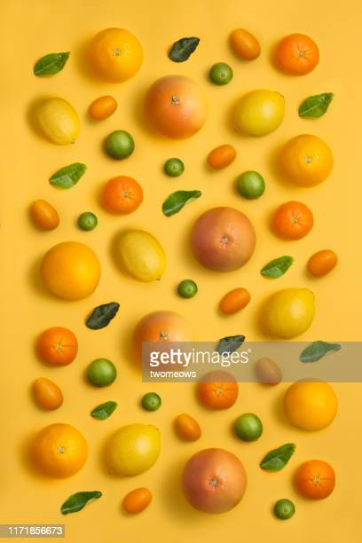 citrus fruit family conceptual still life. - fruit exotique photos et images de collection