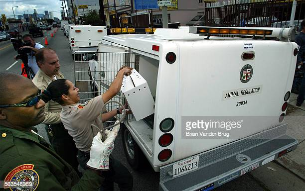 LA City Animal Regulation animal control officers load a cat into one of 10 animal regulation trucks at 2858 Pico Blvd where nearly 100 dogs and cats...