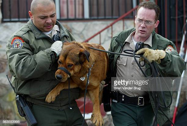 LA City Animal Regulation animal control officers remove a dog from a yard at 2858 Pico Blvd where nearly 100 dogs and cats were found in deplorable...
