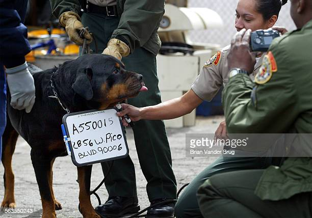 LA City Animal Regulation animal control officers take a 'booking' photo of a dog at Pico Blvd home where nearly 100 dogs and cats were found in...
