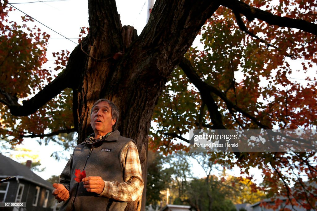City arborist Jeff Tarling discusses a century-old red maple tree with its owner, the author.