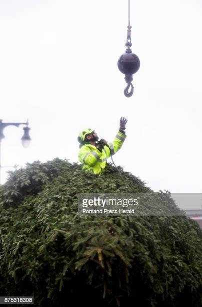 City arborist Troy Derouche reaches for a crane cable while installing a 42foot Balsam Fir tree in Monument Square on Thursday The tree which weighs...