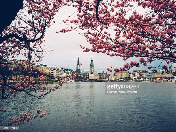 City At Waterfront Through Cherry Blossoms