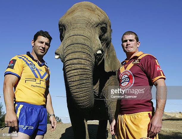 City captain Craig Gower and Country captain Andrew Ryan pose with African elephant 'Yum Yum' at Western Plains Zoo May 11 2006 in Dubbo Australia