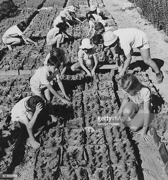 City children helping to produce seedlings which will later be planted in the Negev Desert Israel circa 1950