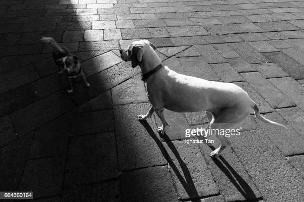 city dogs in light and shadow - ignatius tan stock photos and pictures