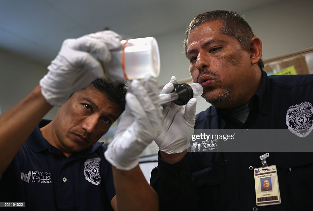 City environmental health specialists Gerardo Valdez (L), and Aaron Salazar transfer live mosquitos caught for testing on April 14, 2016 in McAllen, Texas. City workers are catching mosquitos and sending them to labs to test for Zika and other mosquito-borne diseases. Health departments, especially in areas along the Texas-Mexico border, are preparing for the expected arrival of the Zika Virus, carried by the aegypti mosquito, which is endemic to the region. The U.S. Centers for Disease Control (CDC), announced this week that Zika is the definitive cause of birth defects seen in Brazil and other countries affected by the outbreak.