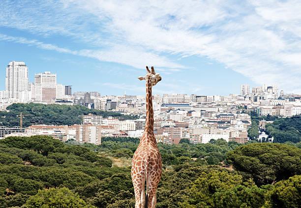 City Giraffe Wall Art