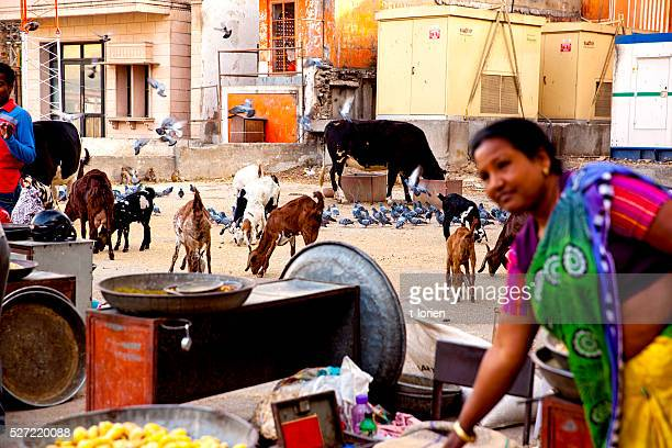 City life in Jaipur, Rajastan - India