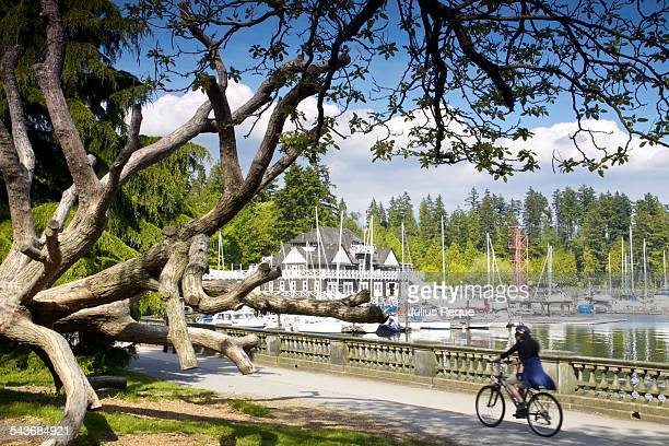 city love affair - stanley park stock photos and pictures