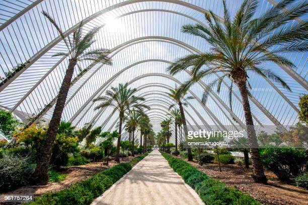 city of arts and sciences (ciutat de les arts i de les ciencies), valencia - dome stock pictures, royalty-free photos & images
