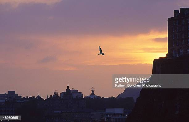 City of Edinburgh silhouetted in layers against a vibrant sunset. Bird flying towards a corner of Edinburgh Castle on the hill.