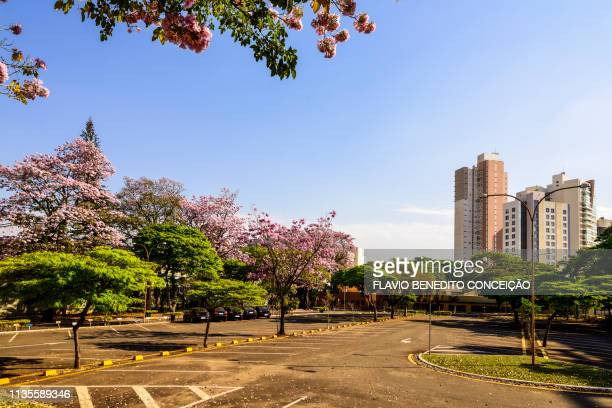 city of londrina in the southern region of brazil in the state of parana, with its beauties, lakes, buildings, sunset. - londrina stock pictures, royalty-free photos & images