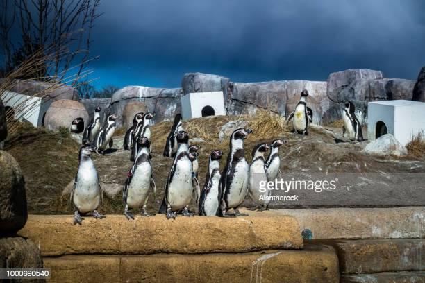 City Of Penguins