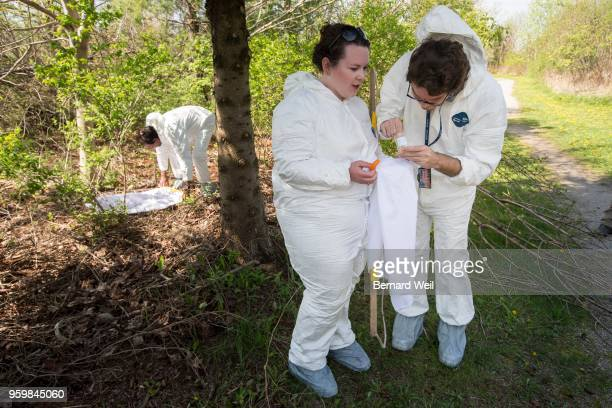 SCARBOROUGH ON MAY 17 City of Toronto Public Health Workers Jagdish Ramchandani Shannon McSorley and Serban Grigoras drag white sheets in a grassy...