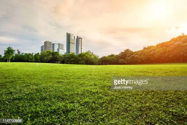 city park grass - parco pubblico foto e immagini stock