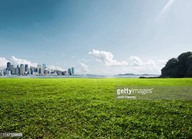 city park grassland - green colour stock pictures, royalty-free photos & images