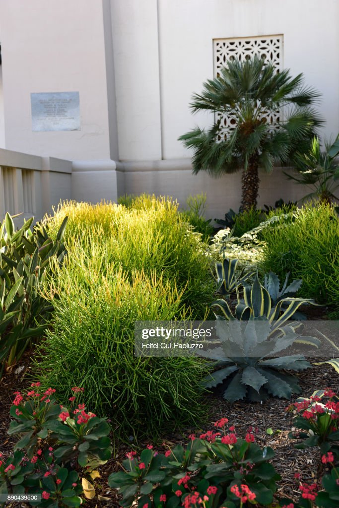 City plants at city of Los Angeles, USA : Stock-Foto