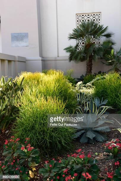 City plants at city of Los Angeles, USA