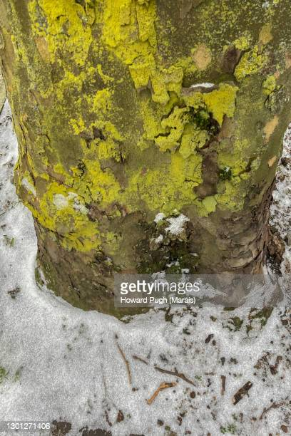 city snowscapes. moss covered tree trunk. close up. - howard pugh stock pictures, royalty-free photos & images