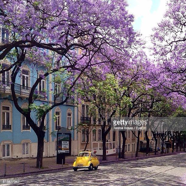 City Street Against Flower Trees And Buildings