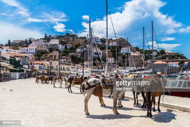 cityscape of hydra island (greece) - hydra greece stock photos and pictures