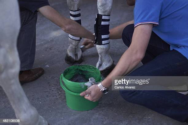 Civil Guards are seen making last minute preparations to horses feet before attending the Easter religious procession at the Port of Malaga on April...