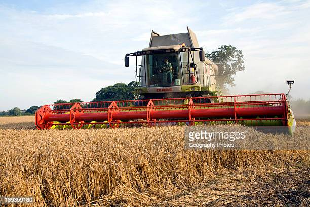 Claas Lexion combine harvester wheat field Boyton Suffolk England