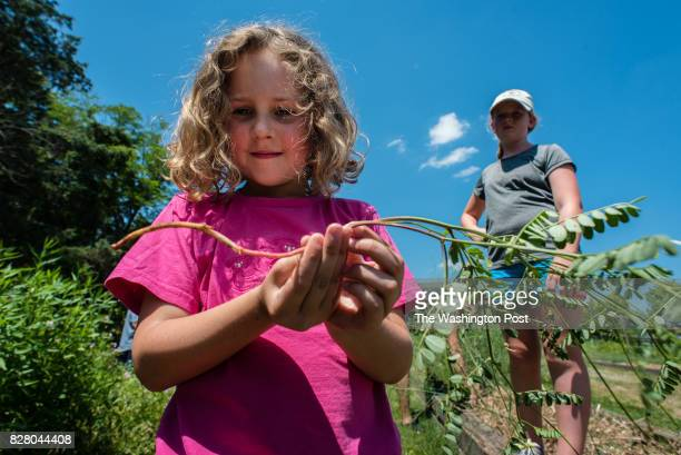 Claire Overstreet shows off a weed that she pulled as Anna Weisberg stands by Overstreet has lived in Willowsford for 2 1/2 years and Weisberg has...