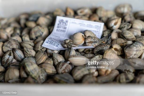 Clam collected by shellfishermen in the boxes at the fish market on May 12 2020 in A Pobra do Caramiñal Spain The shellfishermen of A Pobra do...